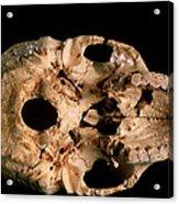 Base Of Skull 5, Sima De Los Huesos Acrylic Print
