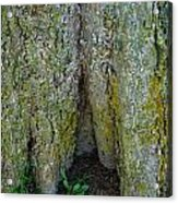 Base Of The Tree View Acrylic Print