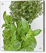 Basil And Thyme Acrylic Print by Joana Kruse
