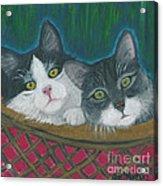 Basket Of Kitties Acrylic Print