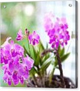 Basket Of Orchids Acrylic Print