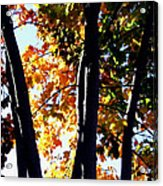 Bathed In Sunlight Acrylic Print