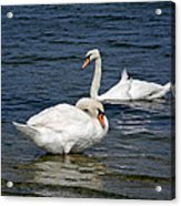 Bathing Beauties Acrylic Print