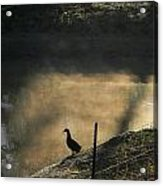 Bathing In Morning Light Acrylic Print