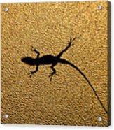 Bathroom Window Lizard Acrylic Print