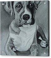 Baxter Acrylic Print by Kim Shayler