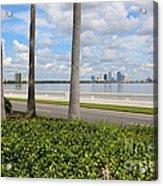 Bayshore Through Palms Acrylic Print