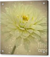 Be A Star Acrylic Print by Angela Doelling AD DESIGN Photo and PhotoArt