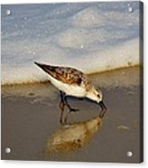 Beach Bird Acrylic Print