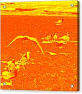 Beach Birds II Acrylic Print