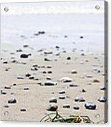 Beach Detail On Pacific Ocean Coast Of Canada Acrylic Print