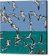 Beach Flight Acrylic Print