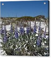 Beach Flora Acrylic Print