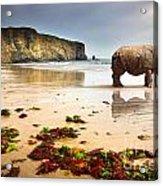 Beach Rhino Acrylic Print