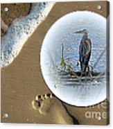 Beached Heron Acrylic Print