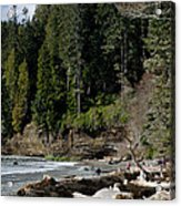 Beached Logs China Beach Vancouver Island Bc Acrylic Print by Andy Smy