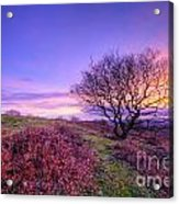 Beacon Hill Sunrise 1.0 Acrylic Print