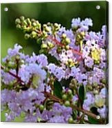 Beaded Lavender Lace Acrylic Print