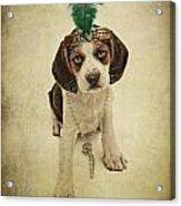 Beagle Puppy Flapper  Acrylic Print