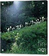 Bear-grass Ridge Acrylic Print