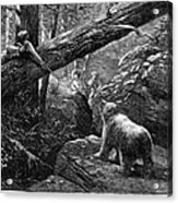Bear Hunt, 1876 Acrylic Print by Granger