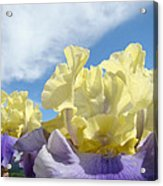 Bearded Iris Flowers Art Prints Floral Irises Acrylic Print