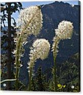 Beargrass Squaw Grass - 4 Acrylic Print