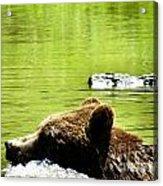 Bearly Swim Acrylic Print