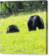 Bears In A Peaceful Meadow1 Acrylic Print