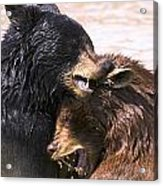 Bears In Water Acrylic Print