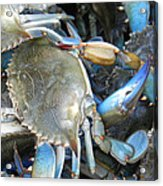 Beaufort Blue Crabs Acrylic Print