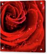 Beautiful Abstract Red Rose Acrylic Print by Oleksiy Maksymenko