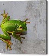 Beautiful American Green Tree Frog On Grunge Background  Acrylic Print