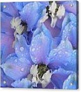 Beautiful Blue Flowers Acrylic Print