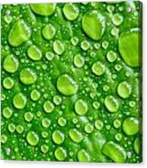 Beautiful Green Leaf With  Water Drops Acrylic Print