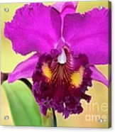Beautiful Hot Pink Orchid Acrylic Print