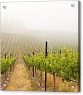 Beautiful Lush Grape Vineyard Acrylic Print