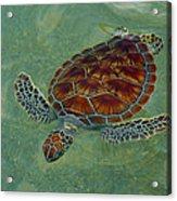 Beautiful Sea Turtle Acrylic Print