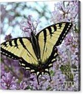 Beautiful Swallowtail Acrylic Print