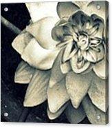 Beauty Among The Ashes Acrylic Print