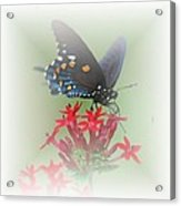 Beauty Flies Acrylic Print