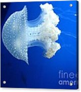 Beauty In The Blue Acrylic Print