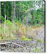 Beauty In The Forest Acrylic Print