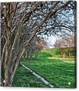 Beauty Without Blossoms Acrylic Print