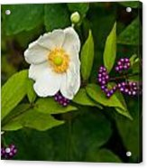 Beautyberry And Anemone 2 Acrylic Print