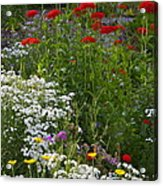 Bed Of Flowers Acrylic Print