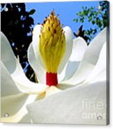 Bed Of Magnolia Acrylic Print