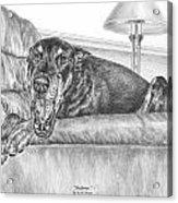 Bedtime - Doberman Pinscher Dog Art Print Acrylic Print by Kelli Swan