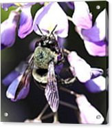 Bee And Blooms - Card Acrylic Print