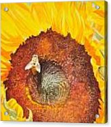 Bee And Sunflowers Acrylic Print